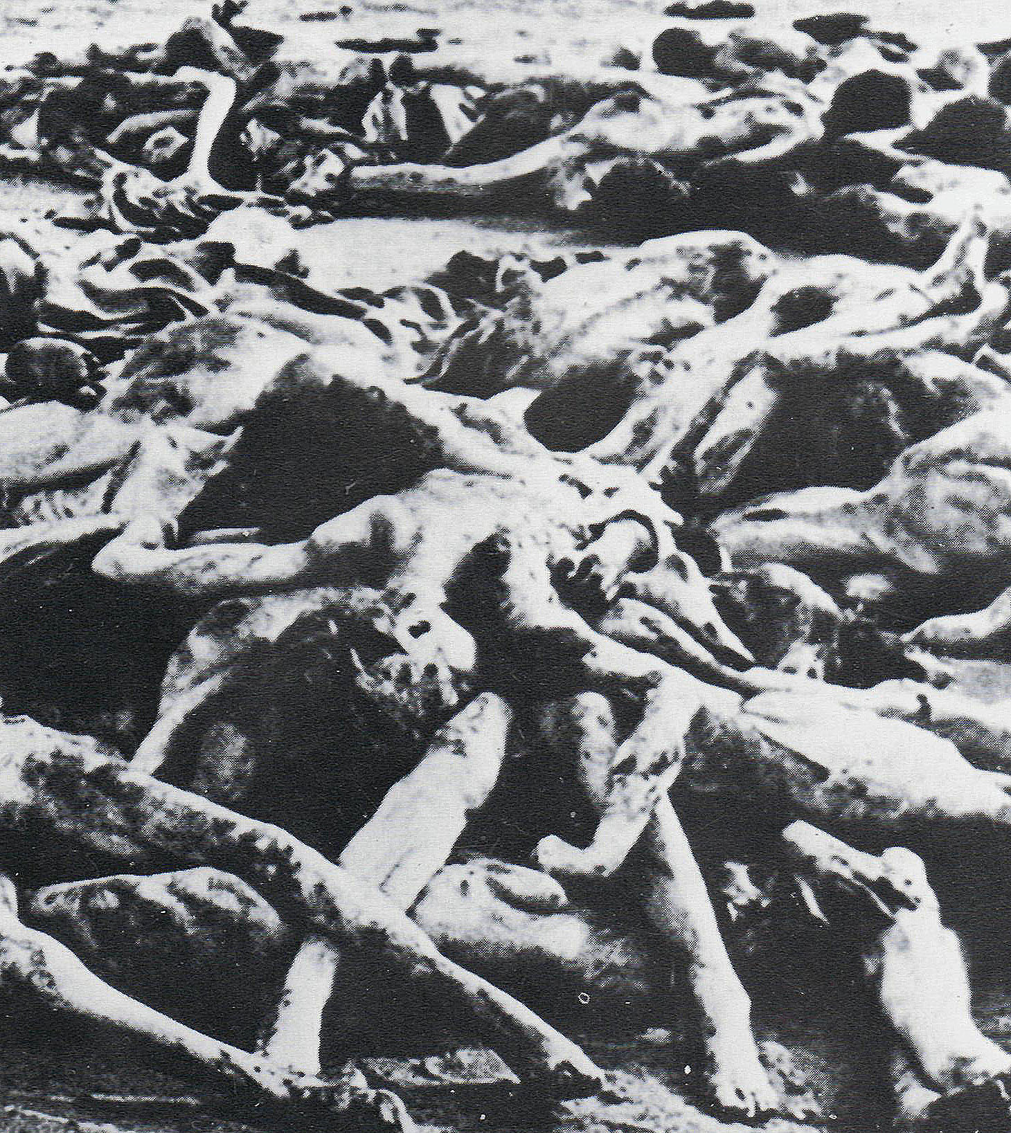 a research on concentration camp What was a nazi concentration camp created by tom haward our research shows that students have a limited, often auschwitz-centric, understanding of the nazi concentration.